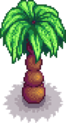Palm tree portrait.png