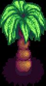 Palm tree portrait.png
