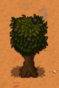 Apple Tree Stardew Valley Wiki