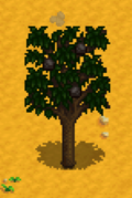 Apricot Tree Stardew Valley Wiki