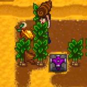 Walnut Harvest.png